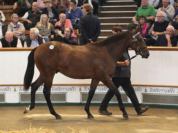 Tattersalls sale topper (4766512)