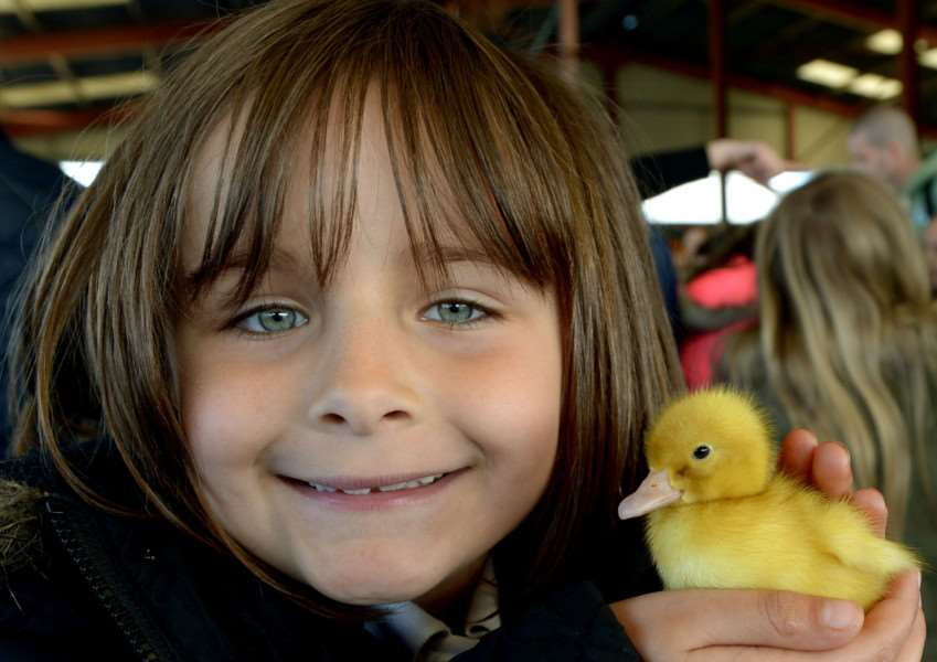 Baylee Wade from Chilton Primary with a young duckling ANL-150427-212208009
