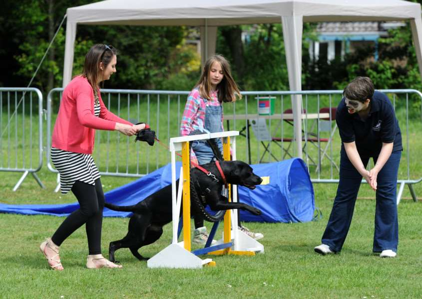 Paws in the Park in aid of St Nicholas Hospice Care''Pictured: Dog agility ANL-160523-010620009