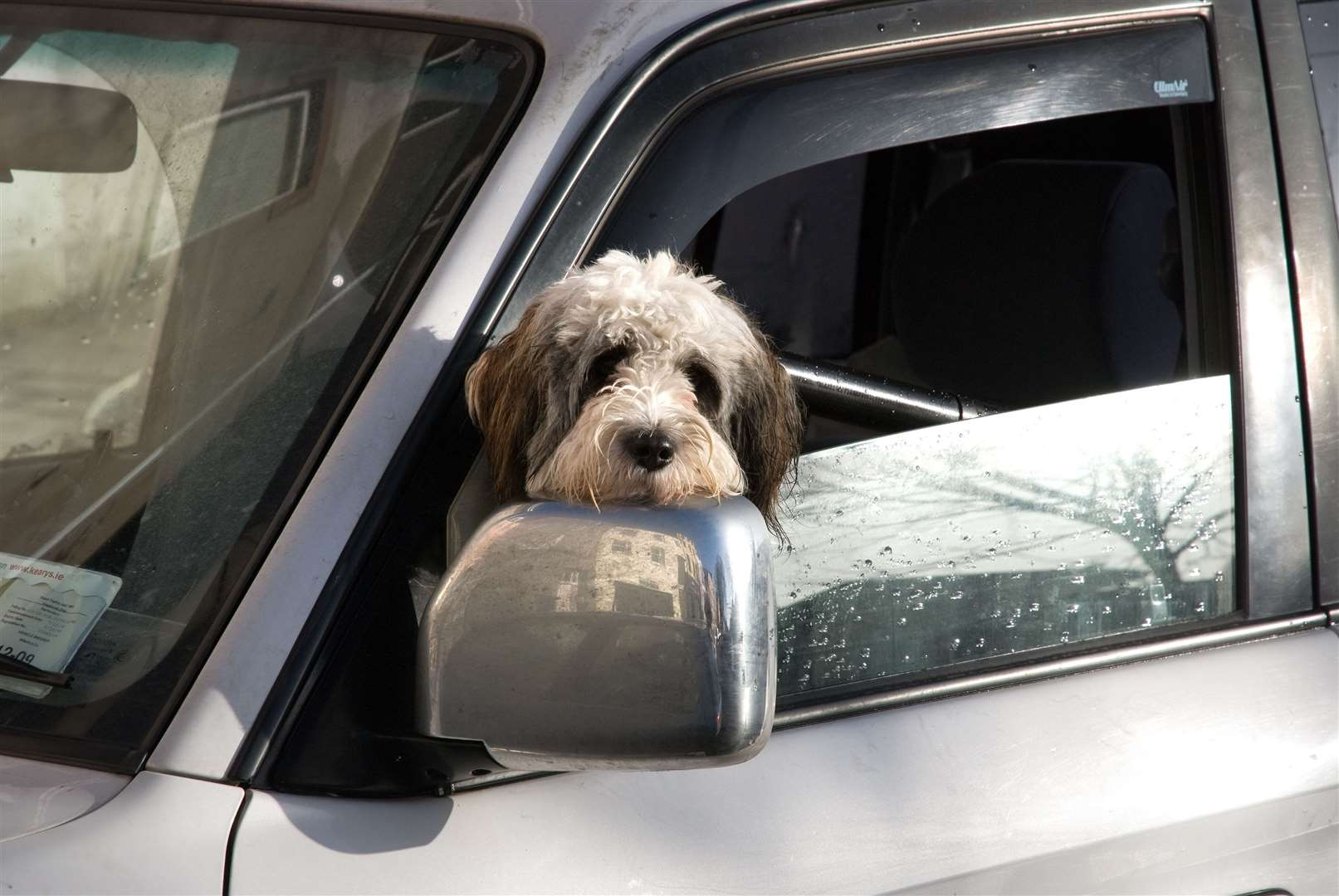 Highway Code Rule 57 states that all animals should be suitable restrained when in a car