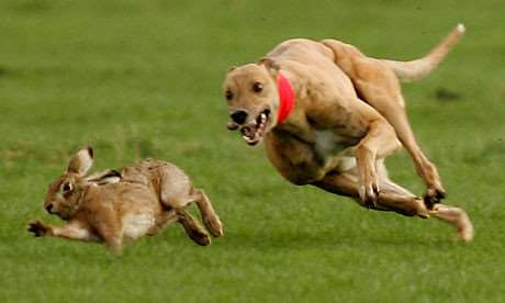 Hare coursing ANL-160401-095543001