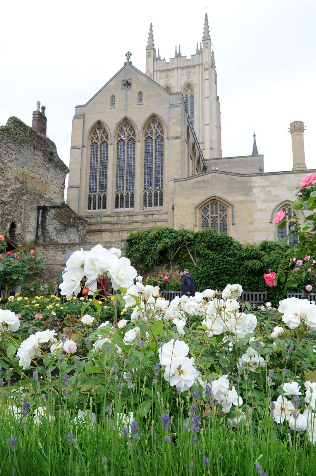 The Rose Garden behind St Edmundsbury Cathedral